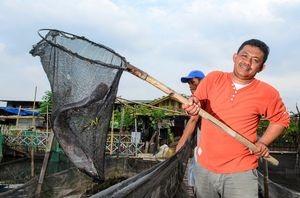 "Andri Wahyudin, penggerak ""Komunitas Kapuk"" memperlihatkan lele hasil budidaya di Kapuk Muara, Kelurahan Penjaringan, Jakarta Utara. (Feri Latief/National Geographic)"